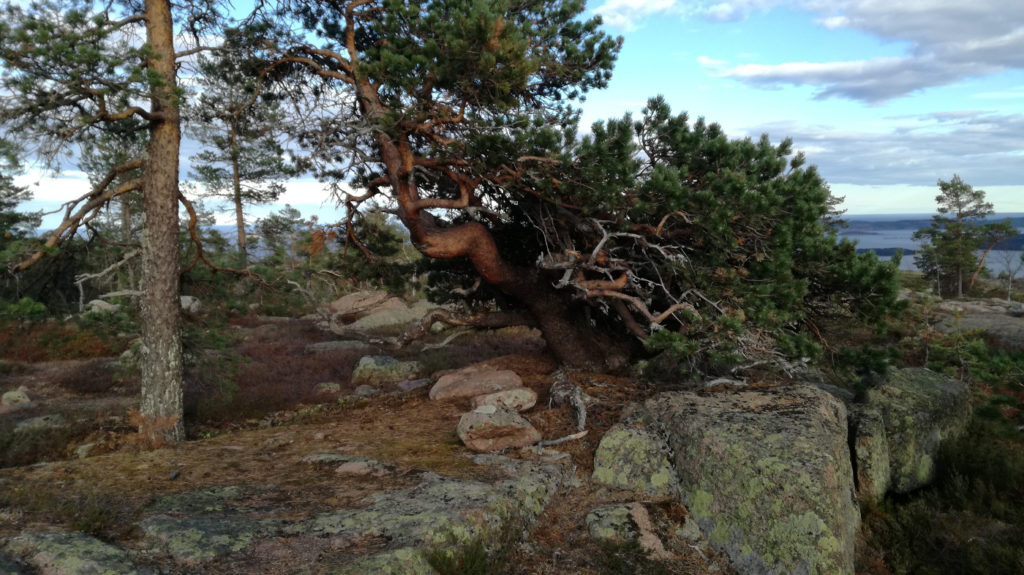 Skuleskogens 4